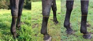 Tina voor en na dik been StromendPaard